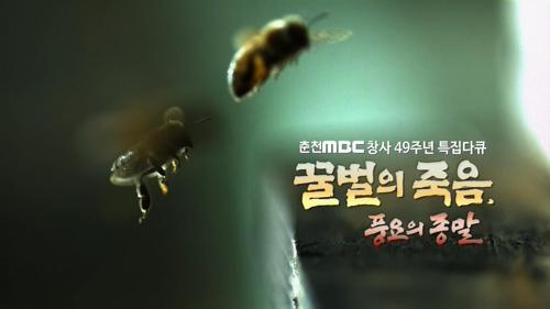 꿀벌의 죽음